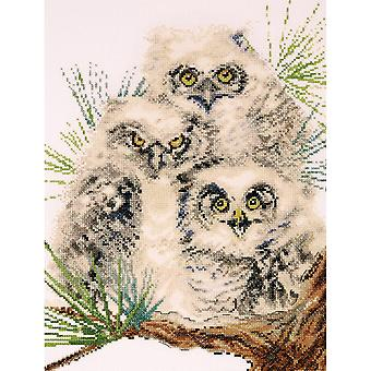Owl Trio Counted Cross Stitch Kit 11