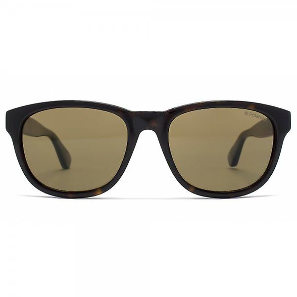 Polaroid Plus Rounded Retro Style Sunglasses In Dark Havana Brown Polarised