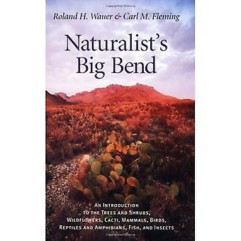 Naturalist's Big Bend: An Introduction to the Trees and Shrubs, Wildflowers, Cacti, Mammals, Birds, Reptiles and Amphibians, Fish and Insects (Louise Lindsey ... Lindsey Merrick Natural Environment Series)