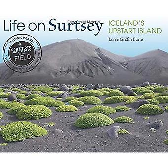 Vie sur Surtsey: île arriviste de l'Islande