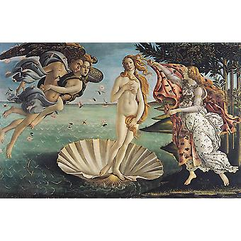 Sandro Botticelli - The Birth of Venus Poster Print Giclee