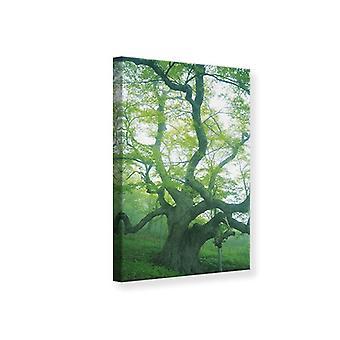 Canvas Print de oude boom
