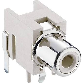 Lumberg 1553 02 weiss RCA connector Socket, horizontal mount White 1 pc(s)