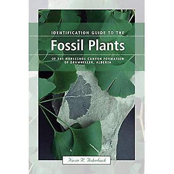 Guide d'identification pour les plantes fossiles de la Formation de Horseshoe Canyon de Drumheller (Alberta)