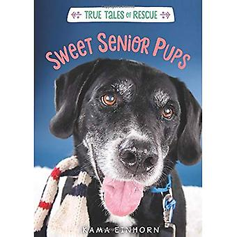 Sweet Senior Pups: Tales of Rescue and Release