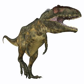 Giganotosaurus was a carnivorous theropod dinosaur that lived in Argentina during the Cretaceous Period Poster Print