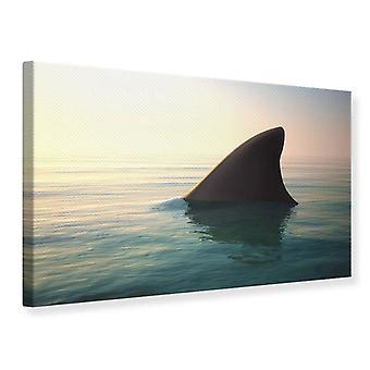 Canvas Print Shark Fin