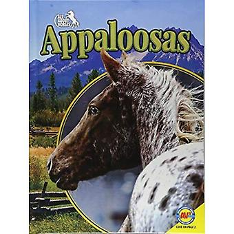 Appaloosas (All about Horses)
