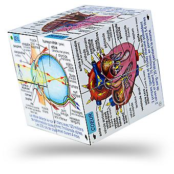 ZooBooKoo French Human Body Systems and Statistics Cubebook - Fold-Out Cube