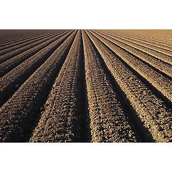 California Field Of Plowed Soil Ready For Planting PosterPrint