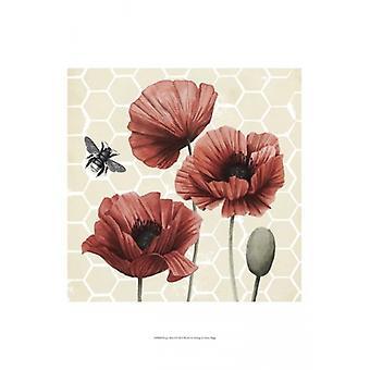 Poppy Buzz I Poster Print by Grace Popp (13 x 19)