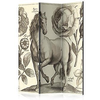 Raumteiler - Pferd [Raumteiler]