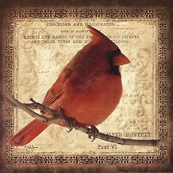 Impression Poster Cardinal mâle par John Jones (12 x 12)