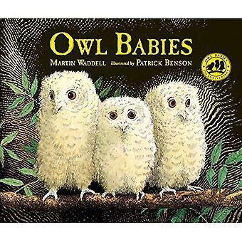 Bebês de coruja