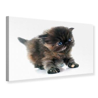 Canvas Print Persian Kitten