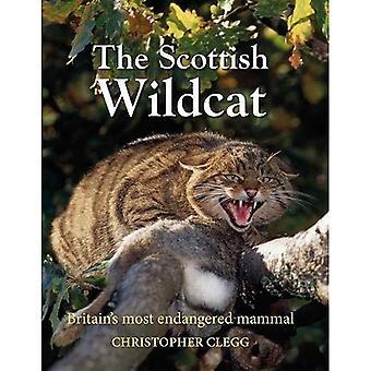The Scottish Wildcat