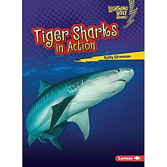 Tiger Sharks in Action (Lightning Bolt Books Shark� World)