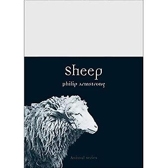 Sheep (Animal)