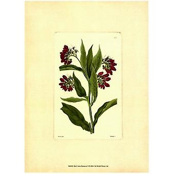Red Curtis Botanical I Poster Print by Vision studio (10 x 13)