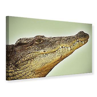 Leinwand drucken in der Nähe von Alligator