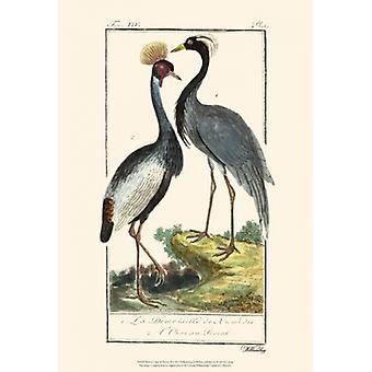 Buffon Cranes & Herons II Poster Print by Georges-Louis Leclerc Comte de Buffon (13 x 19)