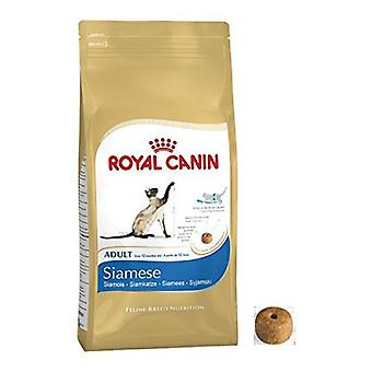 Royal Canin gato siamês adulto alimento de gato equilibrado seco e completar a comida de gato