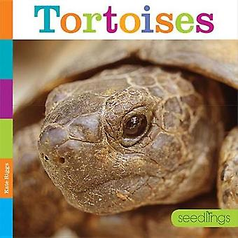 Tortoises by Kate Riggs - 9781628323368 Book