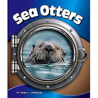 Sea Otters (In the Deep Blue Sea)