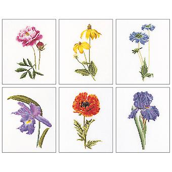 Floral Studies 5 On Aida Counted Cross Stitch Kit 6 3 4