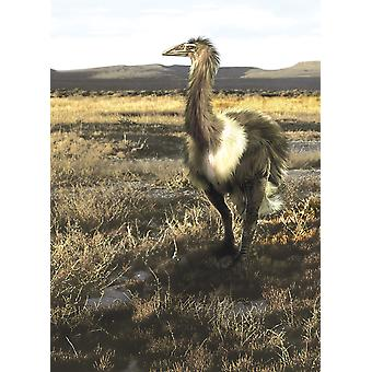Aepyornis flightless bird roaming the Pleistocene savannas of Madagascar Poster Print