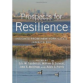 Prospects for Resilience: Insight from New York City's Jamaica Bay
