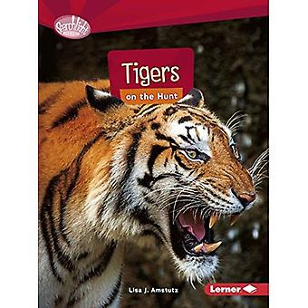 Tigers on the Hunt (Searchlight Books Predators)