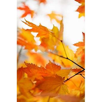 Colors of Fall I Poster Print by Karyn Millet