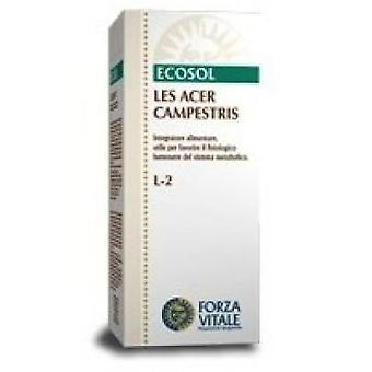 Forza Vitale Les 50Ml Maple Acer campestris. (Herbalist's , Natural extracts)