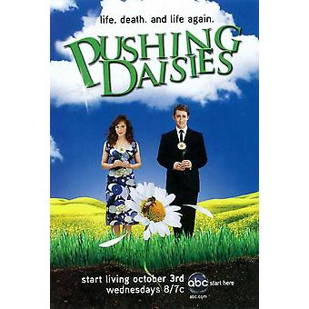 Pushing Daisies (TV) Movie Poster (11 x 17)