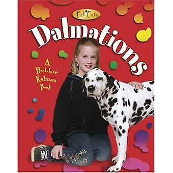 Dalmatiërs