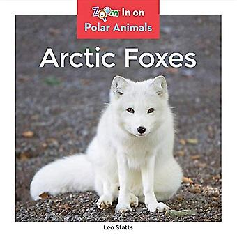 Arctic Foxes (Polar Animals)