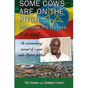 Det finns några kor på planen, de tror att det är över... Det är nu!: An extra hänsyn till en år släpper afrikanska fotboll.