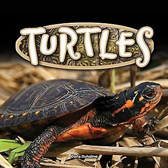 Schildpadden (reptielen!)