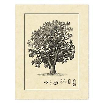 Vintage Tree II Poster Print by Vision studio (16 x 21)