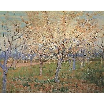 Orchard with Blossoming Apricot Trees, Vincent Van Gogh, 64.5 x 80.5 cm