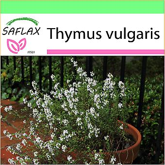 Saflax - Garden to Go - 200 seeds - Common Thyme - Thym commun - Timo - Tomillo   - Echter Thymian