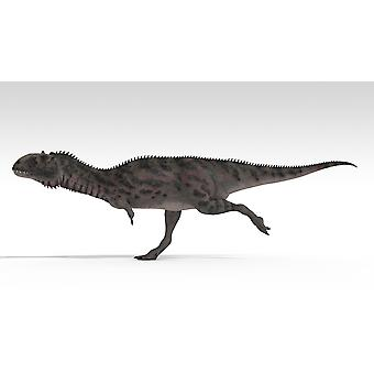 Majungasaurus dinosaur white background Poster Print