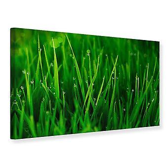 Leinwand drucken Grass mit Morgentau