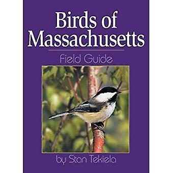 Birds of Massachusetts Field Guide (Field Guides)