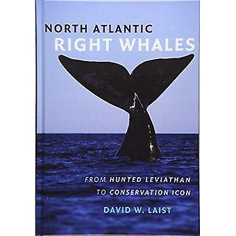 Las ballenas francas del Atlántico Norte: De caza Leviatán al icono de conservación