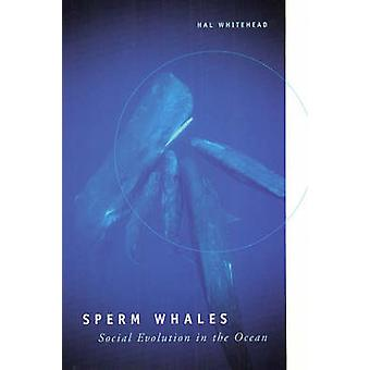 Sperm Whales - Social Evolution in the Ocean by Hal Whitehead - 978022