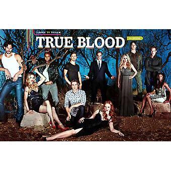 True Blood (TV) Season 5 Movie Poster (11 x 17)