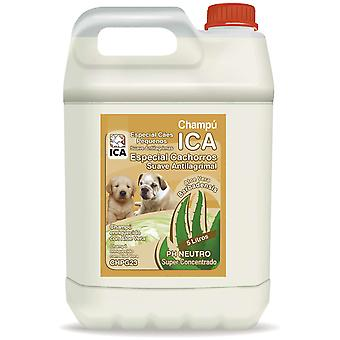 Ica Shampoo Puppy 5 Lts Aloe Vera (Dogs , Grooming & Wellbeing , Shampoos)
