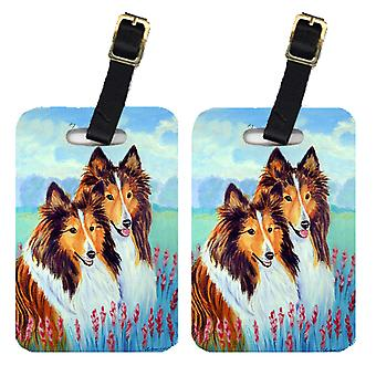 Carolines Treasures  7086BT Pair of 2 Two Sable Shelties Luggage Tags